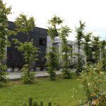 Domki letniskowe Palm Rogowo to zadbany kompleks z duza iloscia zieleni